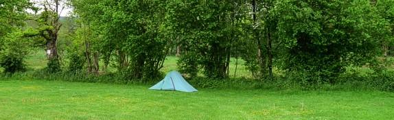 gele anemoon camping